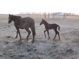 Mare and filly: STOCK by Lythre-does-photos