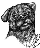 Pug Drawing by HotrodsImpulse