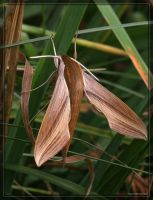 Tersa Sphinx Moth 20D0036351 by Cristian-M