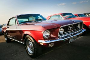 Old Mustang by douglast