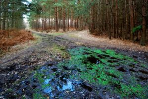 Broadwater Forest by CitizenJustin