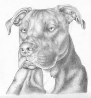 Atilla the Pit Bull by the-jabber-wocky