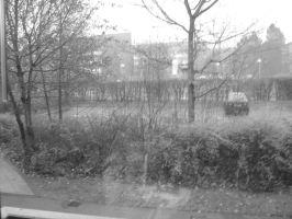 Outside my window BW by And1945