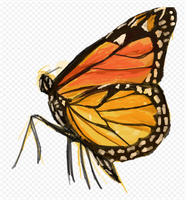 2014-10-24 Butterfly by Casselloma by CrowdPainting
