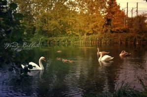 The swan lake 2 by Wendybell80