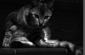 My cat by limuel
