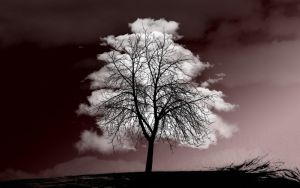 Tree of clouds by michalkosecki