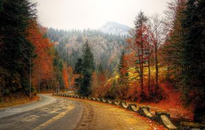 Autumn road II by valiunic