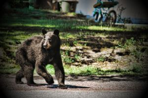 Bear at the Office 3 by skip2000