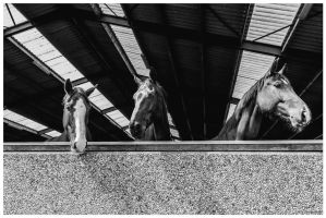 a-horse-of-course-I by corniger-aries
