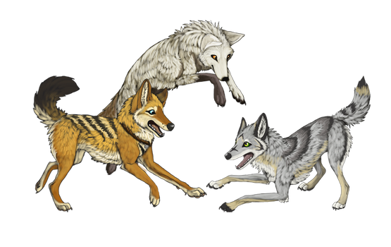 Coyote Party by Silver-Sundog