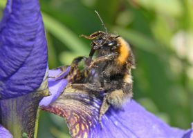 Busy Bee by janruby