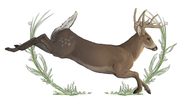 $10 Commission- Stag by Blue-Willow-Tree