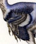 Citipati Detail: Wing by Himmapaan