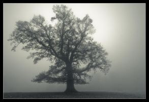Tree of fog by MessiahKhan