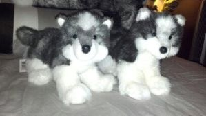 Douglas plush Joli husky new and old version by Vesperwolfy87