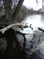 Duckies 5 - Log by Ron4Life