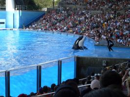 Seaworld by TheSoulKeeperz