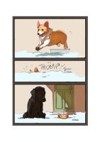 A Corgi's Snow Day by colloqui