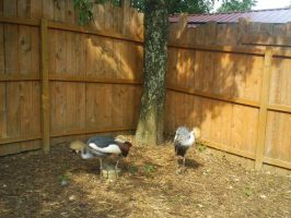Crowned Cranes 2 by ToshirotheKnightWolf