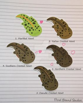 Marbled and Crested Newt Stickers and Magnets by pixelboundstudios