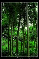 Bamboo by fayedilion