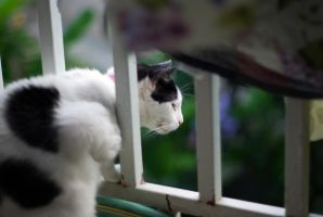 Looking for Birds by Pollito-is-Artzy