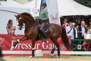 Chestnut Warmblood Extended Trot High Forehand 2 by LuDa-Stock