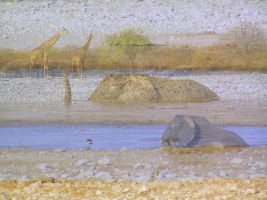 Elephant Collage Namibia by Jenvanw