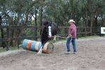 Buddy 3 by ForTheLoveOfAHorse