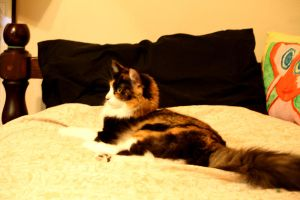 Toola the Cat in bed 1 by creativesnatcher69