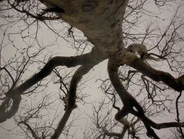 Crippled Tree by Pickles4LES