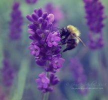 Busy Bee by Dagwanoenyent
