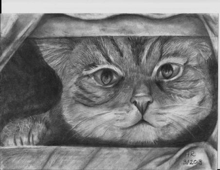 Graphite drawing of hiding cat by sweetpie2