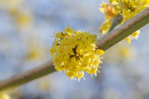 Flowers of Spring by andreym24