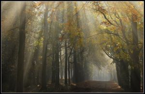 A lightful autumnal lane by jchanders