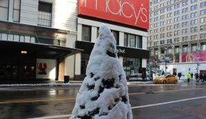 Winter Tree by TheBuggynater