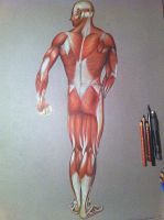 Anatomia muscular humana 1 by CaymArtworks
