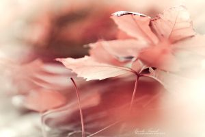 pulpe d'automne by Basile-Tirard