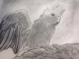 Charcoal Galah by MagicBirdie