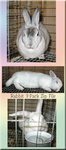 Rabbits by WDWParksGal-Stock