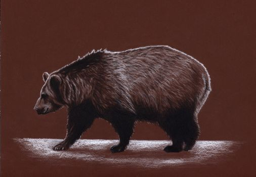 Brown bear by Mustaverikathi