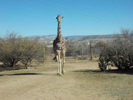 Wildlife Park Camp Verde Arizona by donna-j