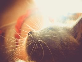 Kitty Whiskers by barefootphotos
