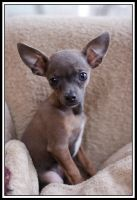 """Dog - """"Baby Girl"""" by TINTPhotography"""