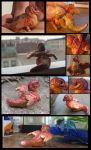 Feathered Firespitter collage by tallydragon