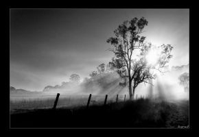morning mist by dannyp5000