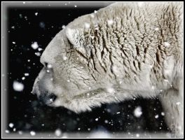 Polar Bear in a Snowstorm by papatheo