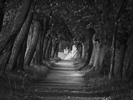 Tree tunnel by michalrz