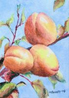 Peaches - ACEO size by spudsy2